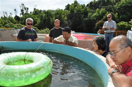 Ed Cichon CEO of Maui Aquaponics talks about raising Tilapia in the outdoor tanks.