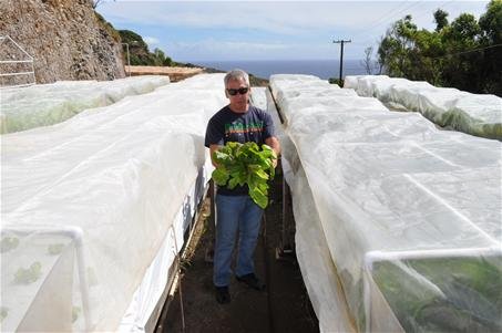 Ed Cichon CEO of Maui Aquaponics showing a 4 week old head of organic lettuce - the water used to grow them are recycled water from the fish farm
